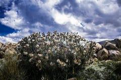 Una imagen agradable de flores andinas fotografía de archivo