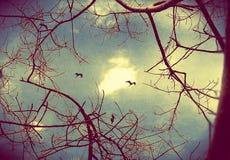 Una imagen artística de las ramas de un árbol deshojadas con el fondo y los pájaros del cielo foto de archivo