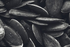 Una imagen blanco y negro de la textura del fondo de las semillas de calabaza foto de archivo