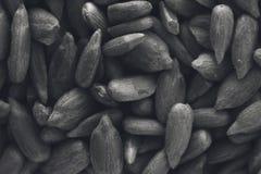 Una imagen blanco y negro de la textura del fondo de las semillas de girasol imagen de archivo