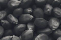 Una imagen blanco y negro de la textura del fondo de los corazones de las palomitas fotografía de archivo libre de regalías