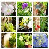 Collage tropical de la decoración de los jardines Foto de archivo