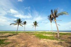 Una imagen de cinco palmeras agradables en el cielo soleado azul Foto de archivo libre de regalías