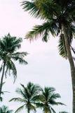 Una imagen de dos palmeras agradables en el azul imagen de archivo