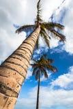 Una imagen de dos palmeras agradables en el cielo soleado azul Foto de archivo libre de regalías