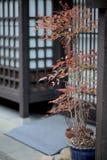 Una imagen de la pasa japonesa vieja Imagen de archivo libre de regalías
