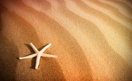 Una imagen de la playa con una estrella de mar Imagenes de archivo