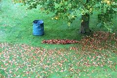 Una imagen de las hojas de un otoño - barrido imagen de archivo libre de regalías