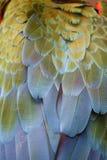 Plumas del Macaw Imagen de archivo