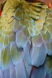Plumas del Macaw Imagenes de archivo