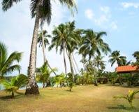 Una imagen de palmeras agradables imagen de archivo libre de regalías