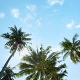 Una imagen de palmeras agradables imágenes de archivo libres de regalías