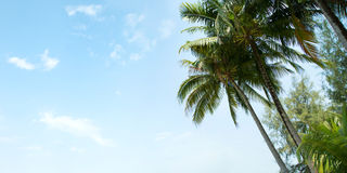 Una imagen de palmeras agradables fotografía de archivo libre de regalías