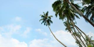 Una imagen de palmeras agradables fotos de archivo libres de regalías