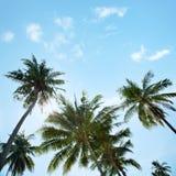 Una imagen de palmeras agradables fotografía de archivo
