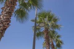 Una imagen de palmeras agradables en el cielo soleado azul imagen de archivo