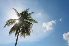 Una imagen de palmeras en el cielo soleado azul Fotos de archivo libres de regalías