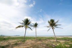 Una imagen de tres palmeras agradables en el cielo azul con algún clou Fotografía de archivo