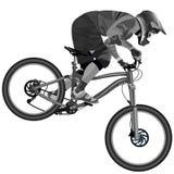 Una imagen de un ciclista que desciende en una bici de montaña en una cuesta Fotografía de archivo