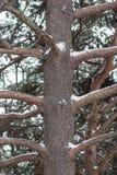 Una imagen de un tronco de árbol marrón con sus ramas durante invierno imágenes de archivo libres de regalías