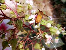 Una imagen donde una abeja se sentó en una flor Fotografía de archivo