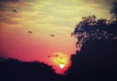 Una imagen ilustrativa de la salida del sol hermosa del verano indio fotografía de archivo libre de regalías