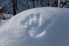 Una impresión de la mano en nieve en bosque Imagenes de archivo