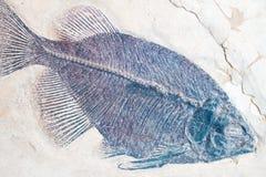 Una impresión fosilizada de un pescado fotografía de archivo libre de regalías