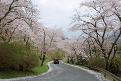 Una impulsión romántica en una carretera curvy de la montaña con los árboles hermosos de la flor de cerezo, en el parque de Miyas Foto de archivo