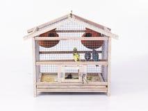 Una jaula con los pájaros fotografía de archivo libre de regalías