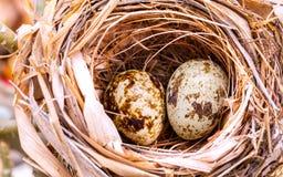 Una jerarquía llenada de los huevos del pájaro Imagen de archivo libre de regalías