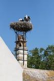 Una jerarquía grande de los pájaros de la cigüeña encima del tejado en Austria Foto de archivo libre de regalías