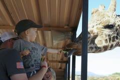 Una jirafa toma el apio de la mano de un muchacho Imagen de archivo