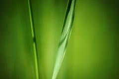 Una lámina de la hierba aislada fotografía de archivo libre de regalías