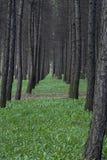 Una línea de árboles Imagen de archivo libre de regalías