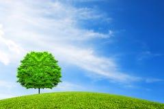 Una latifoglia su una collina verde sotto il cielo con le nuvole insolite Fotografie Stock Libere da Diritti