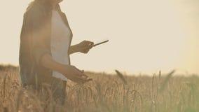 Una lavoratrice agricola con la compressa Agricoltura di Smart ed agricoltura digitale stock footage