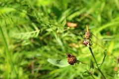 Una libélula en una flor en un campo foto de archivo