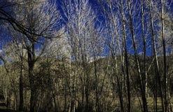 Una linea di albero Fotografia Stock
