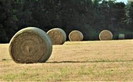 Una linea di Hay Bales rotondo nel campo con il contesto degli alberi immagini stock