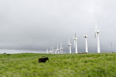 Una línea de turbinas de viento abandonadas viejas y de una vaca. Foto de archivo