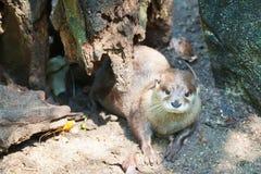 Una lontra sotto l'albero Fotografie Stock Libere da Diritti