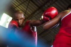 Una lotta maschio dei due atleti in anello di inscatolamento Immagini Stock Libere da Diritti