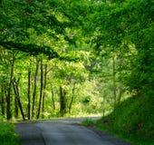 Una luce nella foresta Fotografia Stock Libera da Diritti
