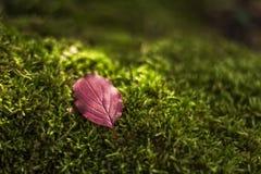 Una luce tenera di verde e del sole della foglia Fotografia Stock