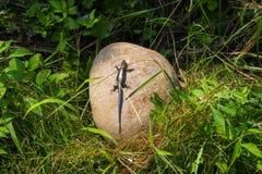 Una lucertola sta dormendo sulla roccia Fotografia Stock Libera da Diritti
