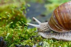 Una lumaca nell'ambiente naturale Macro chiuda sull'immagine della natura Immagine Stock