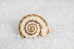Una lumaca sulla sabbia Immagini Stock Libere da Diritti