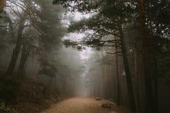Una lunga strada in mezzo alla foresta con la nebbia sopra  fotografie stock libere da diritti