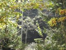 Una luz muy hermosa a través de las hojas de un árbol de nuez en otoño Fotos de archivo